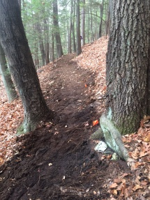 Trail between the trees